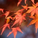 紅葉で絶賛されている鎌倉の長谷寺ってどんなとこ?