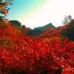 紅葉で大絶賛!気になる東福寺の見頃の時期は!?