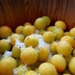 梅シロップが発酵して泡が出るのはなぜ?発酵を防止する方法も紹介!!