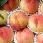 桃を使った果実酒の作り方は?桃酒のレシピを紹介!!