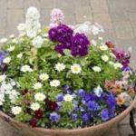 狭い庭で素敵なガーデニングをしたい!!小さい庭の作り方を紹介!!