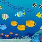 カクレクマノミと他の魚を混泳させたい方必見!!