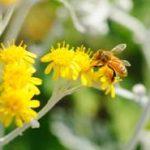 ローヤルゼリーに花粉症の改善効果がある?!検討中の方必見です!!