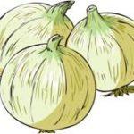 新玉ねぎの保存はどうすればいいの?保存方法や保存期間を紹介!!