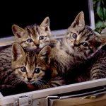 生まれたての子猫はどう育てればいいの?育て方を紹介!!