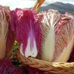 紫白菜の漬物はどう作るの?作り方と保存方法や期間を紹介!!