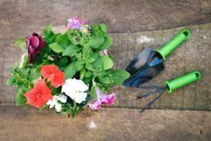 お花のお手入れ