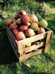 木箱にはいったリンゴ