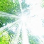 森林の中からの日差し