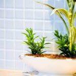 お風呂場の観葉植物